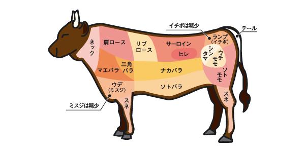 牛肉の部位.png
